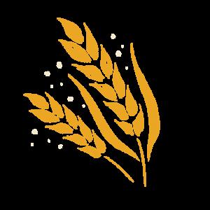 บาร์เลย์ มอลต์ Barley Malt เบียร์ ทำจากอะไร